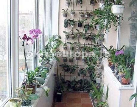 Зимний сад на балконе или лоджии